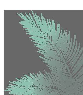 palmera hoja